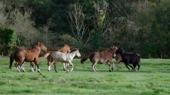Only Foal and Horses